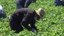 Gobierno federal destina recursos para trabajadores agrícolas afectados por la pandemia: esto debes saber