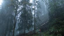 Un hombre borracho reportado como desaparecido se une a su propia búsqueda en un bosque