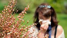 Las alergias en niños y adultos: ¿cómo reconocerlas y qué cuidados tener frente a estas?