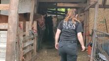 Rescatan caballos que vivían en condiciones deplorables al sureste de Houston
