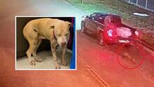 """""""Un caso desgarrador"""": investigan incidente de maltrato animal que queda captado en video"""