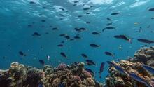 """""""Quiero ser un científico"""", jóvenes que participan en novedoso proyecto sobre la biodiversidad marina en California"""
