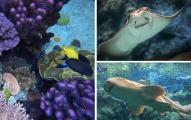 Conoce ciudades submarinas y especies desconocidas en este acuario de California