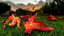 ¿Has notado que las hojas de los árboles no han cambiado de color este otoño? Te explicamos por qué