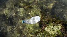 Así está la Bahía de Biscayne por cuenta de la contaminación de plásticos en los océanos