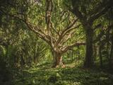 Un mundo con menos árboles: uno de cada tres se enfrenta a la extinción