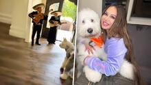 Chiquis le lleva mariachi a su perro Pancho por su cumpleaños y le perdona que mojó su sillón