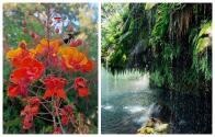 El centro de Texas tiene un jardín secreto que guarda una alberca natural y una cascada