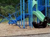 Video capta el adorable juego de una osa y su cachorro en el parque de una escuela