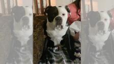 Arrestan a veterinaria del condado Williamson por crueldad animal