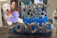 Con todo y mariachis, Chiquis celebra el cumpleaños de su perro ´Pancho Marín´