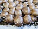 Autoridades de EEUU advierten sobre nuevo brote de salmonela en hongos importados de China