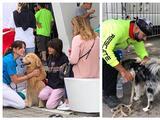 Así trabajan estos perritos para dan apoyo emocional a familiares de desaparecidos en Surfside
