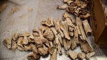 Un usuario de TikTok crea polémico debate por vender huesos humanos