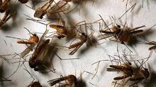 Piden a la comunidad eliminar el agua estancada en sus hogares ya que puede convertirse en criadero de mosquitos
