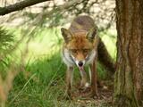 Cuide a su mascota: hay un animal infectado con rabia que está suelto en un área de Broward