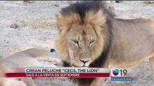 El león Cecil se convertirá en peluche