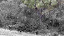 Un hombre subió a un árbol intentando escapar de una persecución policial