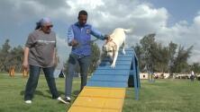 En Egipto hasta los perros hacen gimnasia