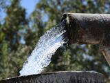 Estos cultivos pueden verse afectados con las nuevas medidas de la Junta de Agua de California