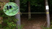 Pareja hacía un pícnic cuando fue atacada por un oso en Carolina del Norte