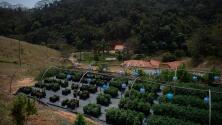 """""""Se hicieron de la vista gorda"""": Descubren megafinca de marihuana de 17.4 hectáreas en Chihuahua"""