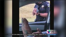Cámara capta controversial arresto de tránsito