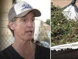 """No queremos actividades de los carteles"": cultivos ilícitos de droga en California preocupan al gobernador Newsom"