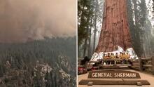El árbol más grande del mundo amenazado por incendio forestal en el Parque Nacional de las Secuoyas