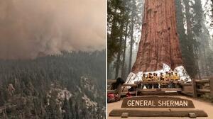 Incendio forestal en California amenaza al árbol más grande del mundo