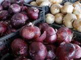 Alertan por brote de salmonela en cebollas que está afectando a más de 30 estados del país