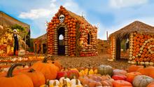 Calabazas rosas y otras raras especies para Halloween que solo vas a ver en California