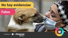 ¿Hay un nuevo coronavirus en perros que puede pasarse a humanos y tiene que ver con el covid-19?