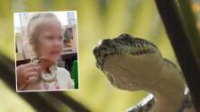 Serpiente africana venenosa muerde en la cara a niña de 5 años en un zoológico