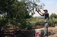 Puertorriqueños se interesan en trabajo en fincas tras llegada de mexicanos