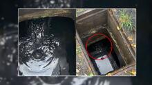 Familia de Florida encuentra a caimán de 7 pies de largo al recoger una pelota en alcantarilla