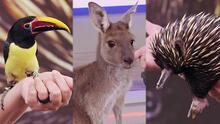 Tres animalitos sorprendentes que están en peligro por el tráfico animal y los desastres naturales
