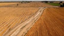 Sequía histórica en California: gobernador Gavin Newsom pide racionar el agua