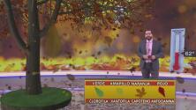 ¿A qué se debe el espectáculo que nos regalan las hojas al cambiar de color en otoño? Albert Martínez responde