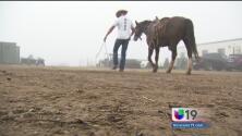 Internos de correccional de Sacramento se rehabilitan entrenando caballos salvajes