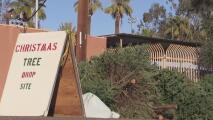 Ciudades de Arizona establecen puntos de reciclaje para árboles de navidad