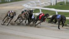 Esta enmienda en Florida busca poner fin a las carreras de perros