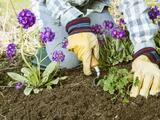 Ayuda a tu jardín a recuperarse del invierno