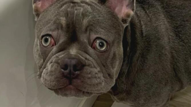 Familia en el sur de Florida denuncia que le robaron una mascota valorada en miles de dólares