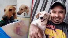 """""""Casi le arranca el brazo"""": Sufre una peligrosa mordida de una perrita callejera, pero ahora es su fiel compañera y le dicen el 'Héroe Canino'"""