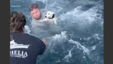 El conmovedor rescate de un perrito en medio del mar que se volvió viral