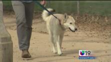 Nueva ley protegerá la vida de las mascotas