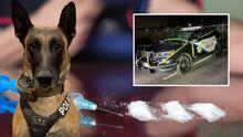 Arrestan a hombre del Área de la Bahía con fentanilo gracias a la ayuda de un perro policía