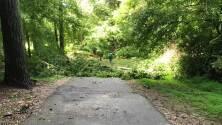 Isaías deja inundaciones y árboles caídos en parque de Raleigh