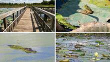 Disfruta en familia de una aventura sin igual en el Brazos Bend Park; no solo hay caimanes